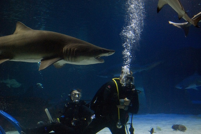 Safe Internet Browsing - Browsing the Internet is Like Swimming With Sharks