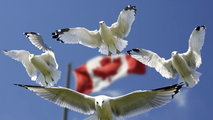 ISPs in Canada Can Charge Money to Expose Pirates