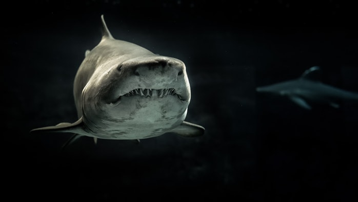 Deep Web Shark