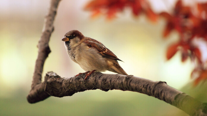 Bird Miner' Cryptominer Targeting Mac Users Who Download