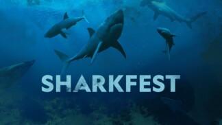 SharkFest poster