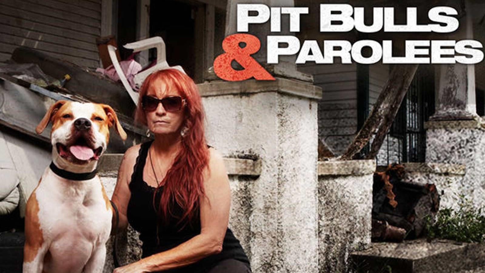 How To Watch Pit Bulls Parolees Online Live Stream Season 16