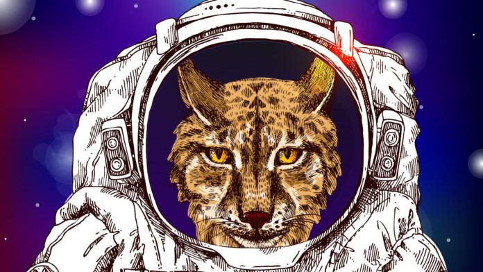 cosmic lynx