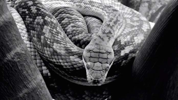 necro python