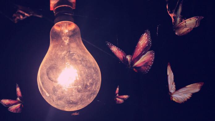 luminous moth